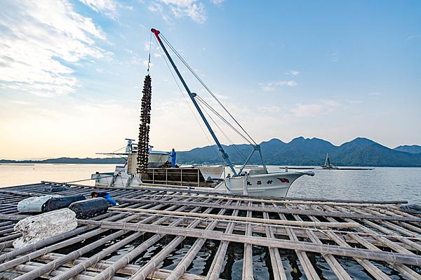 安藝之國巡禮・COOL廣島牡蠣養殖筏巡禮・海鮮BBQ體驗※於牡蠣小屋出發・解散