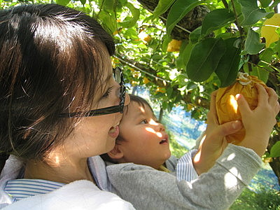 [Mid-August to Mid-October]  Pear Picking Experience with 1 for tasting and 4 for souvenirs per person