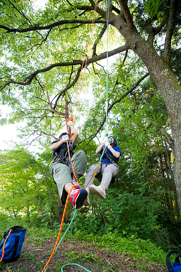 Climbing to the top of the tree! Tree Climbing Experience