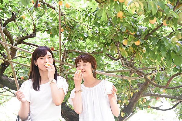 廣島・水果公園採水果體驗★一次就可以享受採收多種季節水果的樂趣 ★