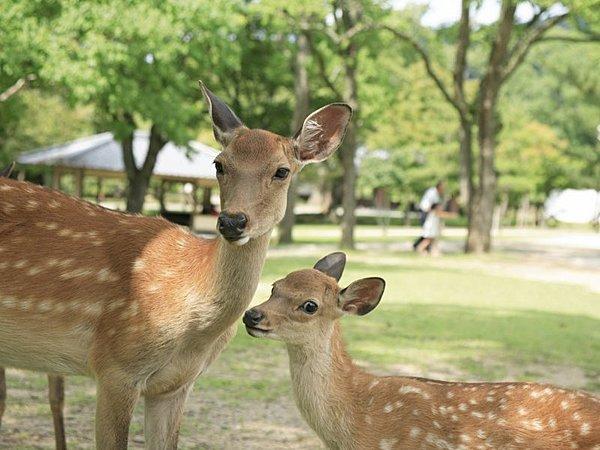 Nara Afternoon Walking Tour (Depart from Kyoto)