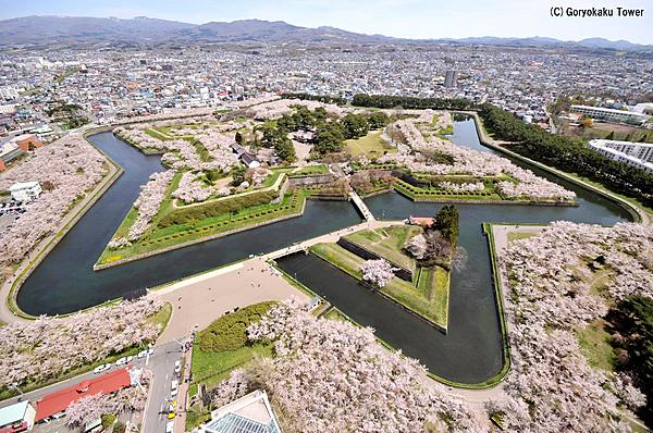 Shunka / No need to take up space! Cherry blossom viewing plan at Goryokaku Park, famous for its cherry blossoms, including a Japanese lunch box.
