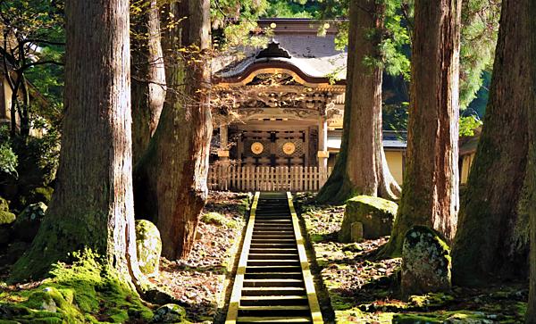 【遊覽越前巴士】金澤站出發!探訪日本最老的古城&超過700年歷史有修行僧侶的寺院&令人緊張萬分的懸崖!眾多值得一看的景點,心滿意足的當日往返一日遊行程!