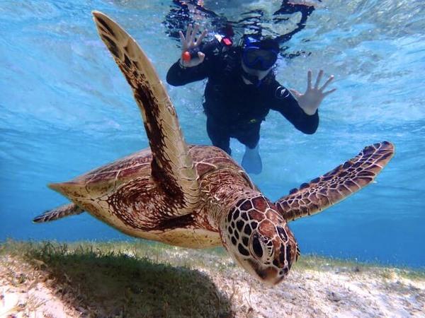 【宮古島】盡情感受宮古島湛藍的海洋!賞龜浮潛行程