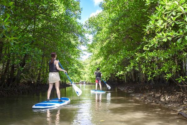 【西表島】觀光+體驗活動的優惠組合!由布島觀光&紅樹林SUP立式槳板or獨木舟體驗(可選擇)
