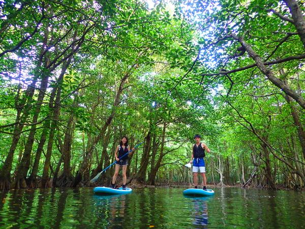 【西表島】超便宜!半天就可以盡情享受西表島的秘境!大冒險行程(可以選擇划SUP立式槳板或獨木舟&洞窟探險)