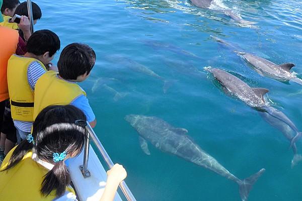 乘船和野生海豚相遇的感動體驗