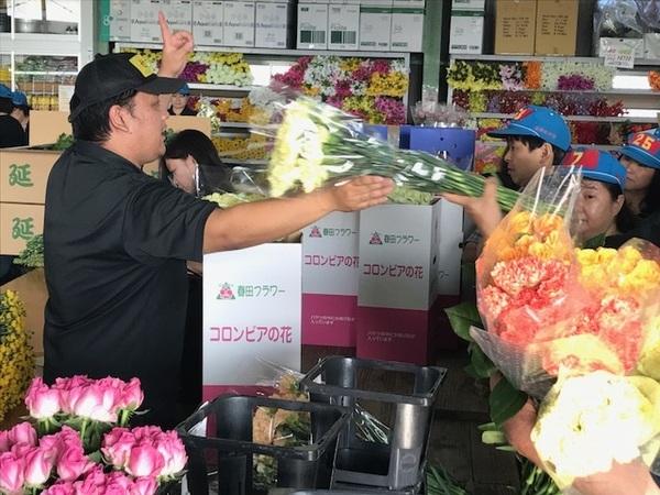參觀花市競價,使用日本花卉來進行插花體驗吧