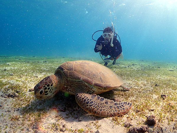 在美麗大海中與海龜同遊體驗潛水(提供水中攝影服務!)