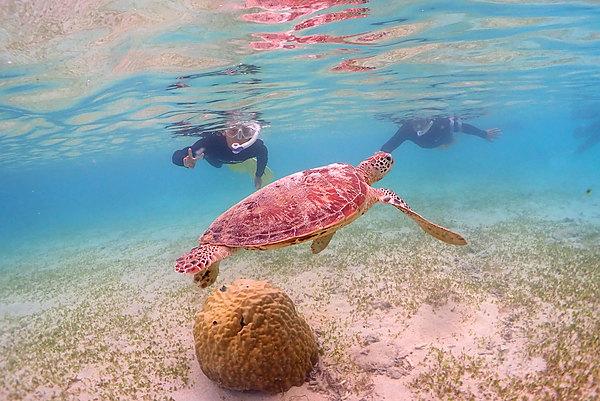 遇見海龜的機率高達92%以上!海龜探索浮潛(提供水中攝影服務!!)