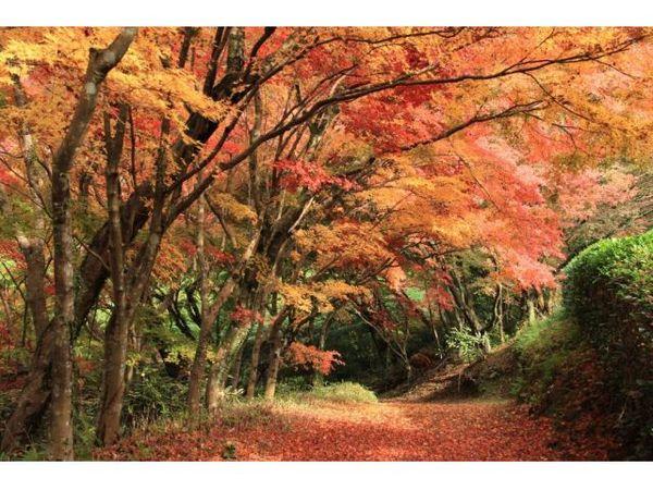 【邊欣賞慧洲園,邊享受幸福時光】入園票&和菓子套裝