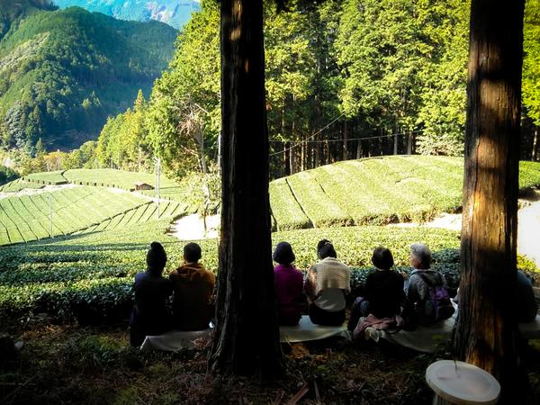 森林と清流に囲まれた茶農園古民家縁側カフェ&茶畑見学!「志田島園」