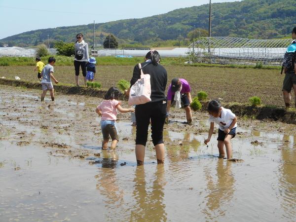 ※現在はご予約を受け付けておりません※自然を楽しもう!朝日里山学校「田植え体験プログラム」