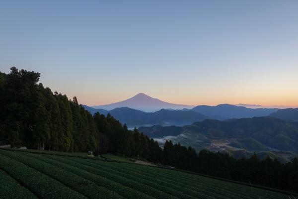 富士山と雲海の見える絶景茶園「おかかえ茶園かねぶん」おもてなしお茶体験