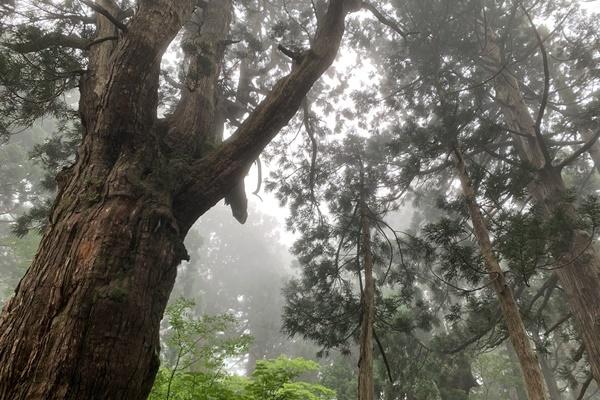 【1日15名限定/佐渡エコツアー(内海府ルート)】神秘の大自然、原生林と杉巨木群トレッキング