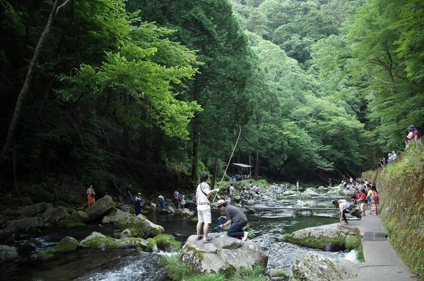 【釣ったあまごはプロが調理!】伊豆の名瀑 浄蓮の滝を望む釣場で清流の女王、あまご釣りに挑戦!