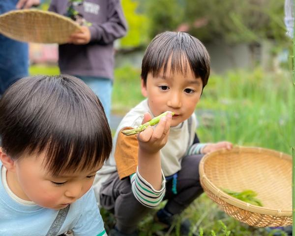 夏休み自然の暮らしを満喫!茶の名産地ー静岡川根で農泊をしよう!