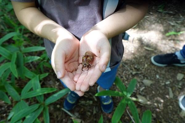 自然の魅力を体験できる・家族で楽しむ森歩き