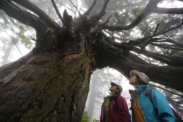 【往復乗船付き】神秘の大自然 原生林と杉巨木群トレッキング ~外海府ルート~(新潟~両津)