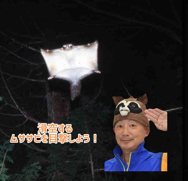 【12/4 (土)限定】メディア出演多数!人気自然解説者・ささき隊長と夜のグライダー・ムササビを観察しよう!