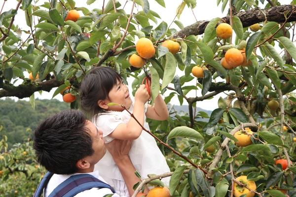 【11/6,11/7】果物収穫食べ放題&ピザ作り体験!朝日里山学校「三宝園収穫体験プログラム」
